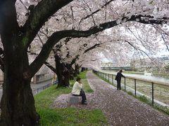 京都桜だより 2017 4月9日