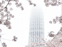 2017桜/隅田川