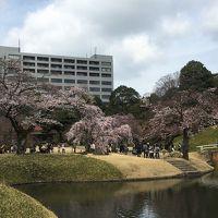 2017年4月 東京散策� 小石川後楽園&六義園に花見