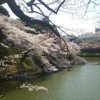 千鳥ヶ淵に桜を観に行ってみた♪
