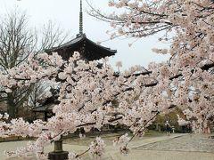 京都の桜♪高瀬川~祇園白川、金戒光明寺、真如堂♪ジャン=ポール・エヴァン京都でブランチ&DiningCafebar閏でディナー♪