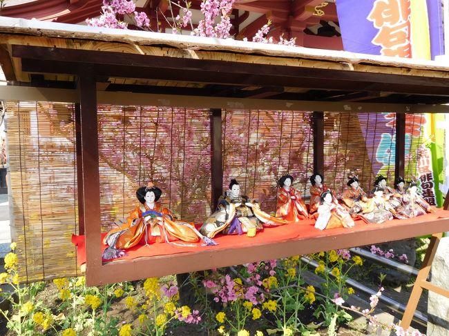 以前訪れた埼玉県川口市にある密蔵院の安行桜が見頃という事で見に行ってきました。<br />沖田桜とも呼ばれる早咲きの安行桜は、ピンクの色彩がやや濃く、花が少し小ぶりなのが特徴です。境内のあちこちで綺麗に咲く花を楽しめました。<br /><br />続いて桃まつりが開催されていた南千住にある素盞雄(すさのお)神社で、桃の花と沢山の雛飾りを観賞してきました。