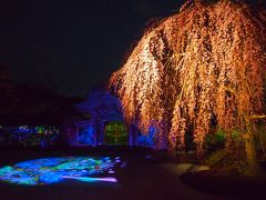 青春18きっぷの旅 2017年春 桜を求めて京都へ 〈2〉 ~夜の八坂神社・高台寺など~