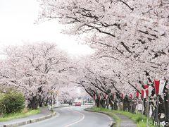 2017 東海の桜【4】鍋田川堤