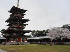 ちょっと早めの吉野山の桜と奈良の桜を満喫!①