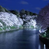 ライトアップの桜に感動!千鳥ヶ淵の夜桜写んぽの巻♪