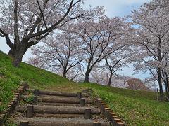 桜見物(山梨県) 2017.04.10 =1.大法師(おおぼし)公園=