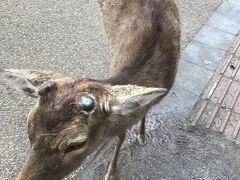奈良公園(奈良)