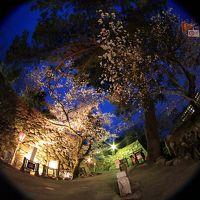 松阪城の桜のライトアップに出かけて来ました