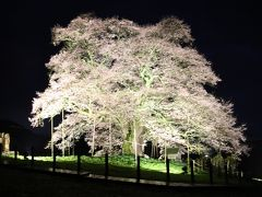 8度目の逢瀬はライトアップされた醍醐桜と岩井畝の大桜のダブル1本桜観賞。