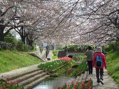 横浜市都筑区水と緑の散策マップ「M折本農地から江川せせらぎ緑道を楽しむコース」をたどる