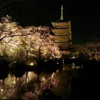 雨の中の大阪城の桜と幻想的な絶景の東寺ライトアップ♪(その2)