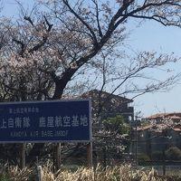 海上自衛隊鹿屋航空基地の桜を見てみよう   ☆鹿児島県鹿屋市