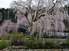 桜見物(山梨県) 2017.04.10 =2.身延山久遠寺=