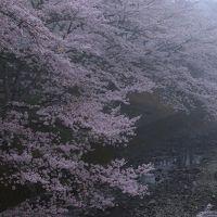京都 桜めぐり~和らぎの道、善峯寺、正法寺、向日神社、御香宮神社