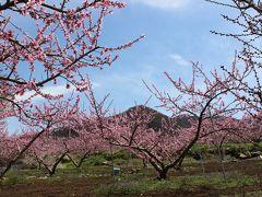 桃の花と日本最古のワイナリーを訪ねて