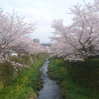山口の桜と食い道楽