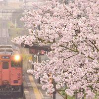 満開な桜が咲き広がる芸備線沿線の古き良き桜の風景を探しに訪れてみた