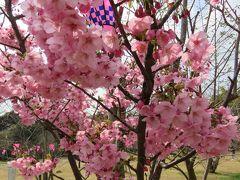 2017春、九州西北部の城巡り(17/35):3月30日(5):平戸城(5/6):天守閣の展示室、地蔵坂櫓、陽光桜、亀岡神社