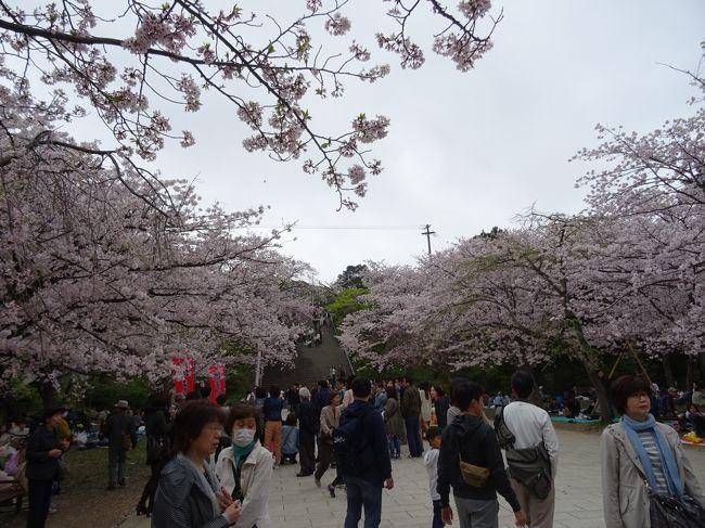 福岡県博多にある 西公園の桜が見頃と聞いてやってきました。<br />西公園には駐車場がないので<br />博多湾の近くに車を停めて 約1キロほど歩きました。<br /><br />春にはソメイヨシノ オオシマザクラ ヤマザクラ シダレザクラなど<br />およそ1300本もの桜が咲き誇る桜の名所として有名です。<br /><br />今回お弁当を持ってゆっくりお花見を楽しみました。