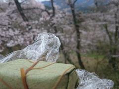 吉野へお花見へ 時々 柿の葉寿司