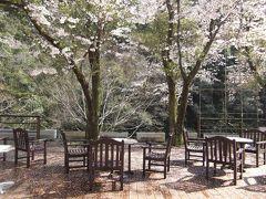 お湯が来る町~桜を追いかけて、温泉でもほっこりしました~広島市佐伯区