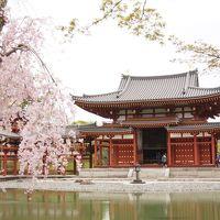 京都宇治観光(平等院鳳凰堂、宇治神社、宇治上神社、源氏物語ミュージアム)