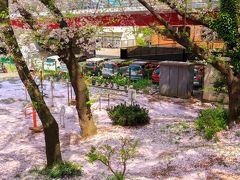 儚い桜を愛でる春の桜散歩~大和千本桜~