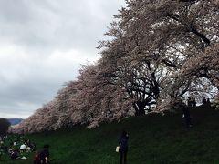 2017.4 お花見まとめ