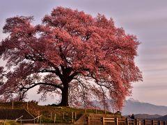 山梨と静岡の桜の旅