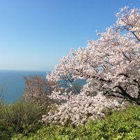 書写山円教寺→赤穂温泉→姫路城と好古園(2日目) 桜満開!