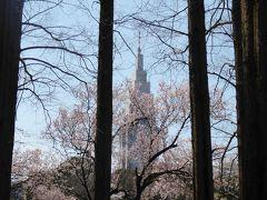 春爛漫の「新宿御苑」♪ Vol.4 新緑と満開の桜の競演♪