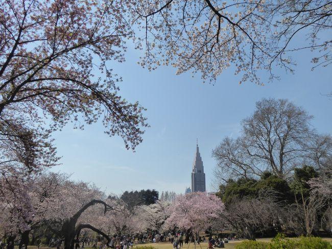 春爛漫の「新宿御苑」♪ Vol.2 満開の桜を愛でる♪