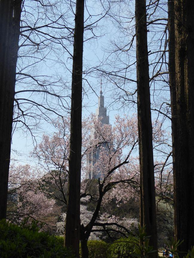 2017年4月5日、新宿の名所「新宿御苑」に行きました♪<br />ちょうど、満開を迎えている。<br />それにしても大混雑でびっくり。<br />しかも外国観光客が大挙に押し寄せている状況で、<br />周囲はYouたちだらけ。<br />国際的なお花見になったものだと時代を感じさせる。<br /><br />広大な新宿御苑は美しい。<br />満開のサクラがあちこちと。<br />また、新緑が始まり、<br />その競演も美しい。<br />特にモミジの新緑は素晴らしい。<br />ゆったりと眺めて♪