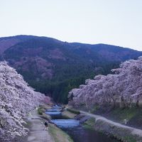 お天気に恵まれた滋賀のドライブの1日 ☆スイーツから桜まで楽しみました☆