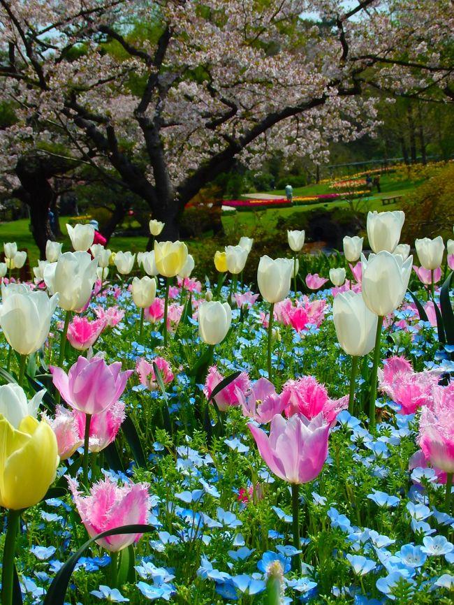 実家の母が久しぶりに我が家に遊びに来ました。<br />温泉とお花が大好きな母の為に(自分もだけど(^^ゞ)<br />舘山寺温泉と浜松フラワーパークを案内しました♪<br />お天気にも恵まれて、最高のお花見日和となりました(^。^)y-.。o○