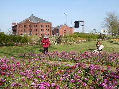 春爛漫の優雅な横浜♪ Vol6 ☆新港中央広場のみなとガーデン 美しい花畑♪