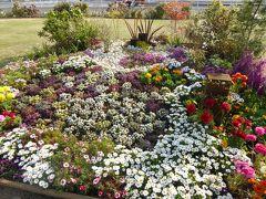 春爛漫の優雅な横浜♪ Vol7 ☆新港中央広場のみなとガーデン 美しいアーバンガーデン♪