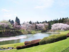 青葉の森公園と川村記念美術館の枝垂れ桜