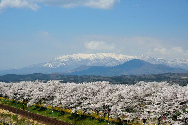 """ある晴れた4月の日曜日、宮城県へ観桜の旅へ。<br /><br />2017年の桜前線はゆっくりと北上し、そろそろ東北地方へと到達した模様。<br />今年はお花見のタイミングがなかなか無かったんですが、以前よりいつか行ってみたいな~と思っていた東北でも有数の名所「白石川堤一目千本桜」の桜がそろそろ満開とのことで、日帰りで観桜の旅へ。<br /><br />今回は、JRの「船岡駅」から「大河原駅」間の約4キロわたる白石川沿いの桜並木とともに、こちらも桜の名所である「船岡城址公園」を合わせて訪れてしまおうという、何とも桜づくしの行程にしてみました。<br /><br />春のうららかな日差しの下、一斉に咲き誇る約1,200本もの桜並木は壮観そのもの♪<br />また、近年整備された「しばた千桜橋」や「樅ノ木は残った展望デッキ」からの景色も素晴らしく、まさに""""一目千本桜""""に相応しい光景が広がっていました。<br /><br />【 散策ルート 】<br />東京駅 >> 仙台駅 >> 船岡駅 >> <br />●白石川堤一目千本桜<br /> さくら歩道橋 >> (白石川堤遊歩道) >> しばた千桜橋 >> 樅ノ木は残った展望デッキ<br /><br />〔参考〕今回の旅における他の旅行記<br />●【さくら名所100選】平和観音が見守る桜の園 <船岡城址公園花だより><br /> http://4travel.jp/travelogue/11234896<br />●【日本100名城】伊達政宗が青葉山に築いた天険の城 <仙台城登城記><br /> http://4travel.jp/travelogue/11236716"""