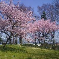 桜前線追いかけて!気ままにドライブ一泊旅行!