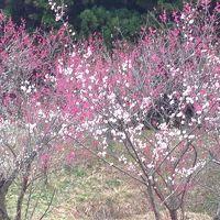 秋田市梅林園へ ~春だなぁ。