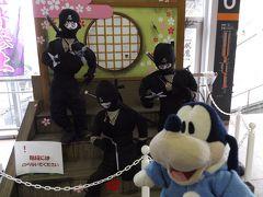 グーちゃん、春の花見合宿へ行く!(お魚道場で、花見??・・・出発編)