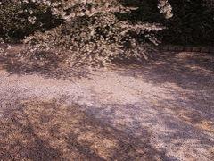 日本100名城スタンプラリーを始めたのでスタンプを押すだけの青森津軽・秋田・山形・福島会津4名城巡りと春爛漫の弘前を歩く
