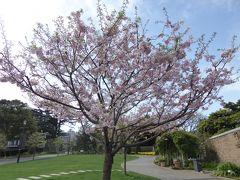 春爛漫の優雅な横浜♪ Vol12 ☆アメリカ山公園:美しい花の風景♪