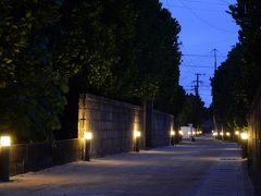 ライトに照らされた白砂の道とふくぎ並木がきれいな渡名喜島