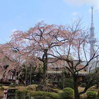 浅草・上野でお花見 2017年4月