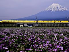 ドクターイエローと富士山と・・・そして蓮華草の絨毯を見に「富士山れんげまつり」に訪れてみた