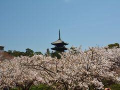 京都仁和寺で御室桜を満喫