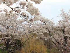 晩春の浄土平と満開の花見山公園
